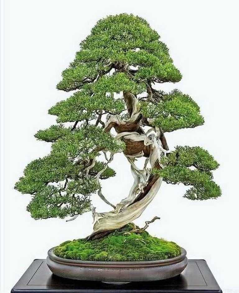 40 Incredible Bonsai Tree Ideas For Your Garden Page 39 Of 39